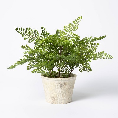 "13"" x 13"" Artificial Fern Plant in Terracotta Pot - Threshold™ designed with Studio McGee"
