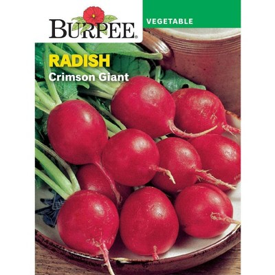 Burpee Radish Crimson Giant