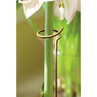 Adjustable Amaryllis Stake - Gardener's Supply Company