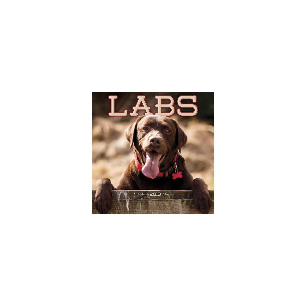 Labs 2019 Calendar - (Paperback)