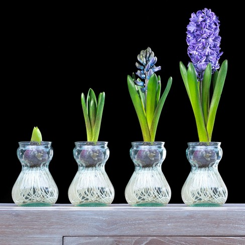 Hyacinth Kit With Clear Artisan Glass - Red - Van Zyverden - image 1 of 3