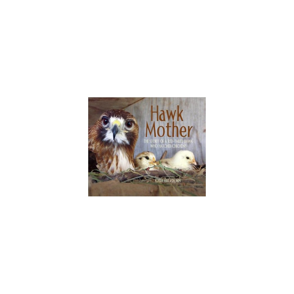 Hawk Mother : The Story of a Red-tailed Hawk Who Hatched Chickens - by Kara Hagedorn (Hardcover)