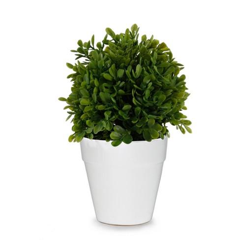 "Artificial Boxwood Plant in Ceramic Pot Green 8"" - Lloyd & Hannah - image 1 of 1"