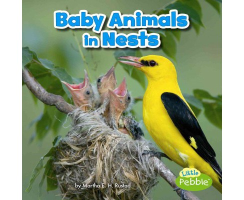Baby Animals in Nests (Paperback) (Martha E. H. Rustad) - image 1 of 1