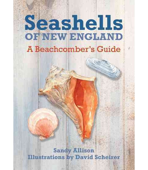 Seashells of New England : A Beachcomber's Guide (Paperback) (Sandy Allison) - image 1 of 1