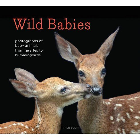 Wild Babies - by  Traer Scott (Hardcover) - image 1 of 1