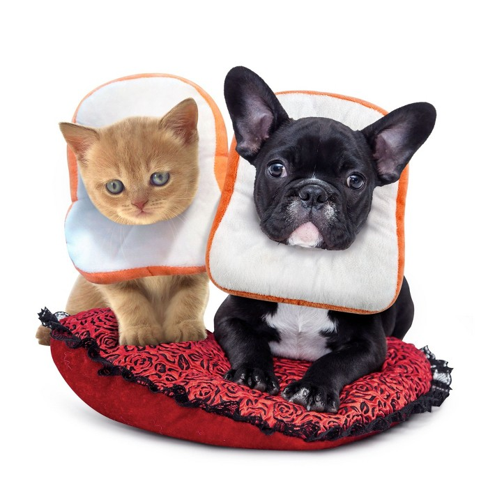 Cat Dog Surgery Recovery Collar, Bread Toast Wound Healing Protective Elizabethan Soft Pet Neck Cone Adjustable (Medium, Neck Size 24-27cm) : Target