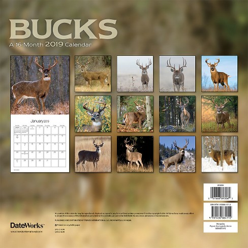 2019 Wall Calendar Bucks - Trends International