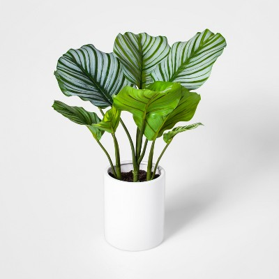 "19"" x 14"" Artificial Orbit Peacock Plant In Pot Green/White - Project 62™"