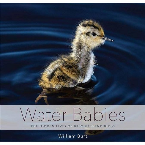 Water Babies - by  William Burt (Hardcover) - image 1 of 1