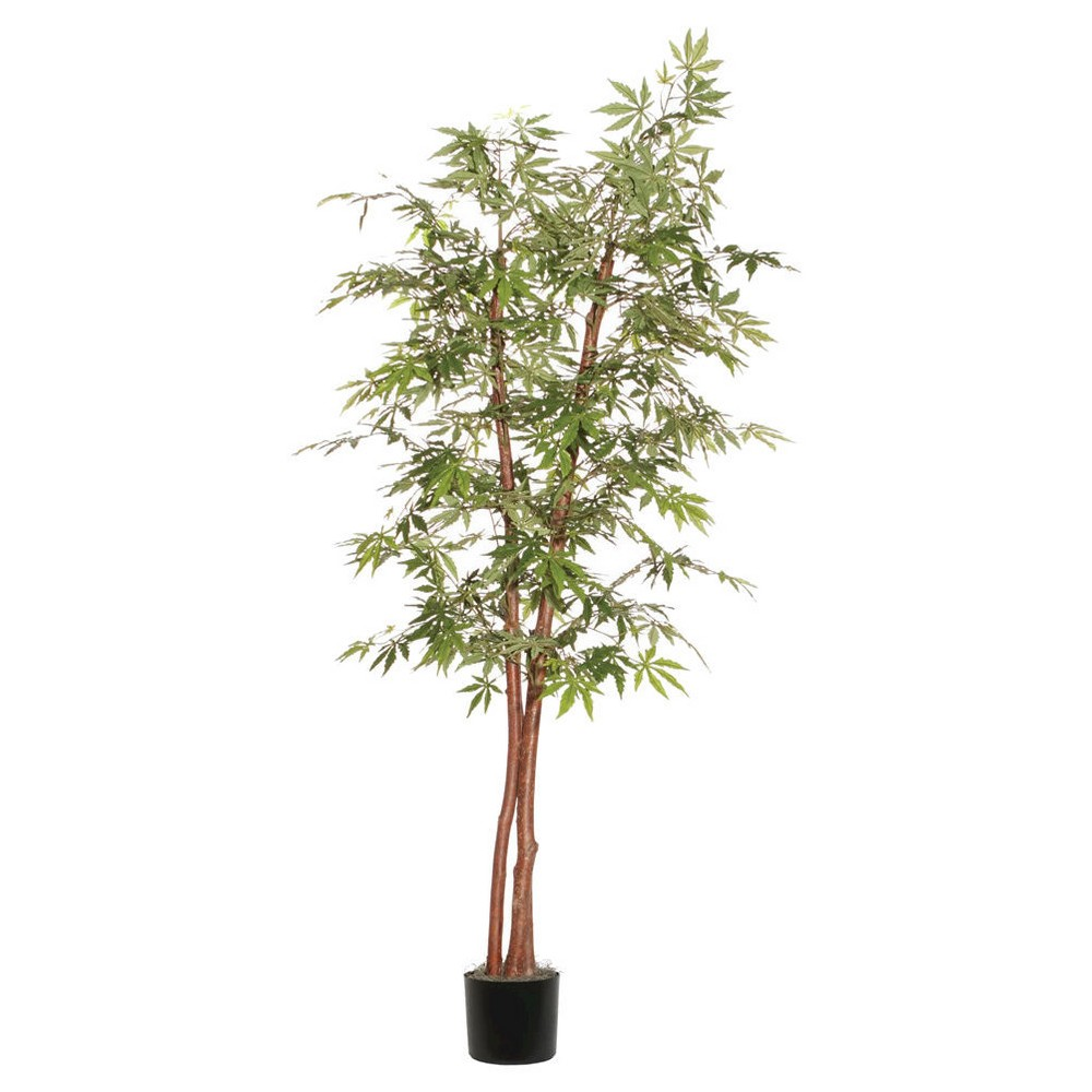 Image of Deluxe Japanese Maple Tree in Black Plastic Pot with American made Excelsior (72), Green