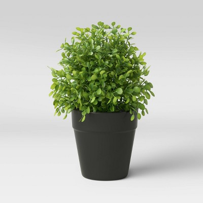 Boxwood Artificial Plant in Black Ceramic Pot - Threshold™