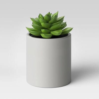 Succulent in Cement Pot - Project 62™