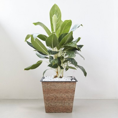 Hatteras Square Self-Watering Planter Light Brown - Vifah