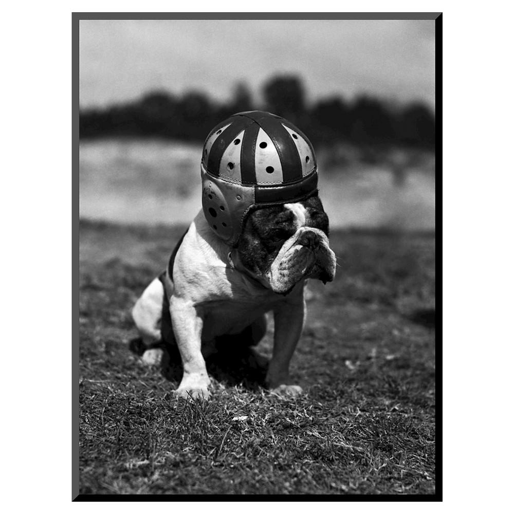 Art.com Dog Wearing Helmet Photographic Print, Gray