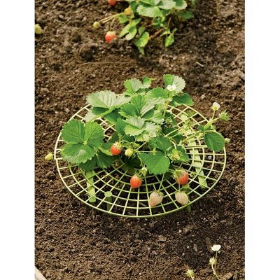 Strawberry Supports, Set of 6 - Gardener's Supply Company