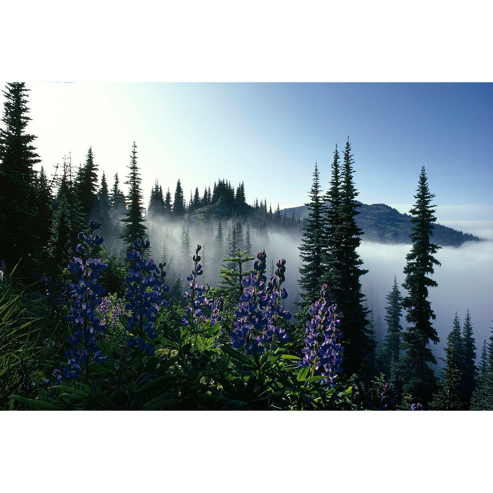 National Geographic Misty Forest with Purple Flowers Poster - Blue/Green