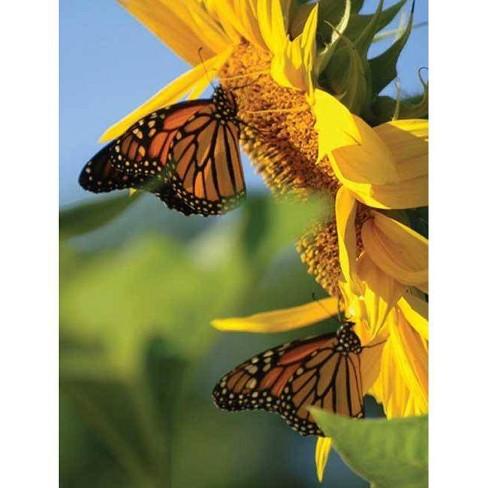 Butterfly Sunflower Blank Journal - (Nodin Press Blank Journals) (Hardcover) - image 1 of 1