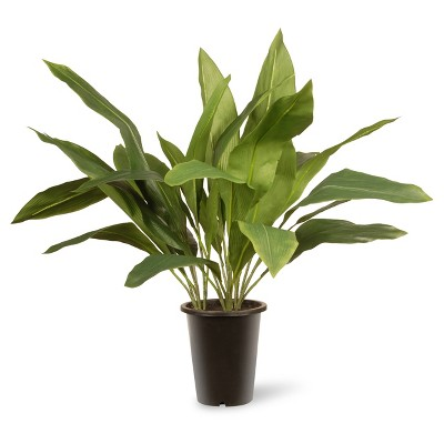 "30"" Garden Accents Artificial Aspidistra Plant - National Tree Company"