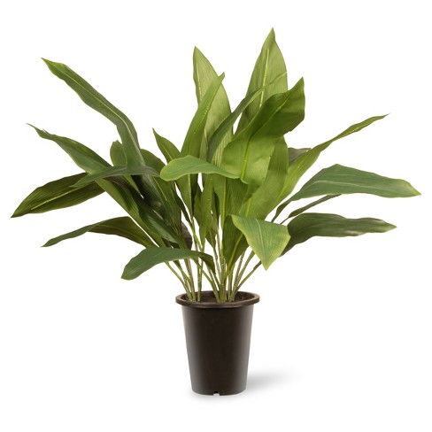 "Garden Accents Artificial Aspidistra Plant Green 30"" - National Tree Company® - image 1 of 1"