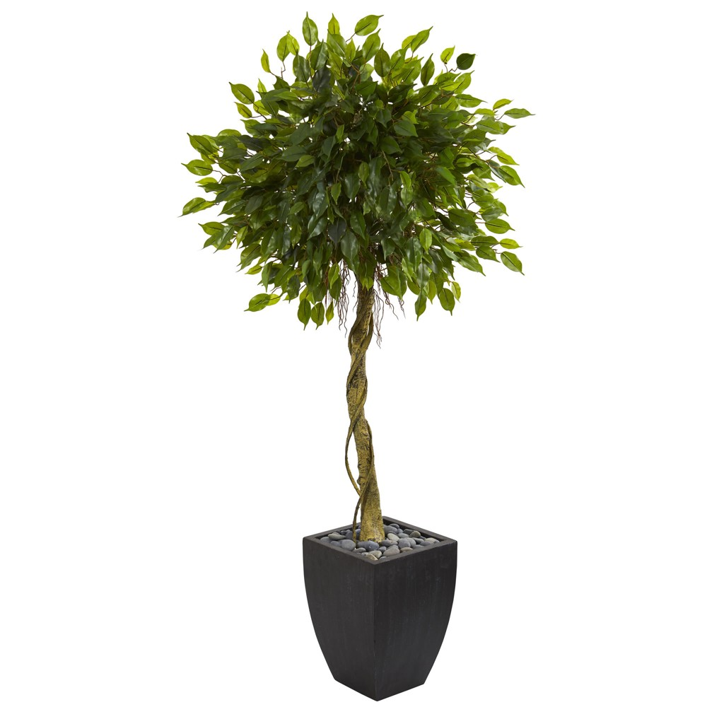 5.5ft Ficus Artificial Tree In Black Planter - Nearly Natural, Green