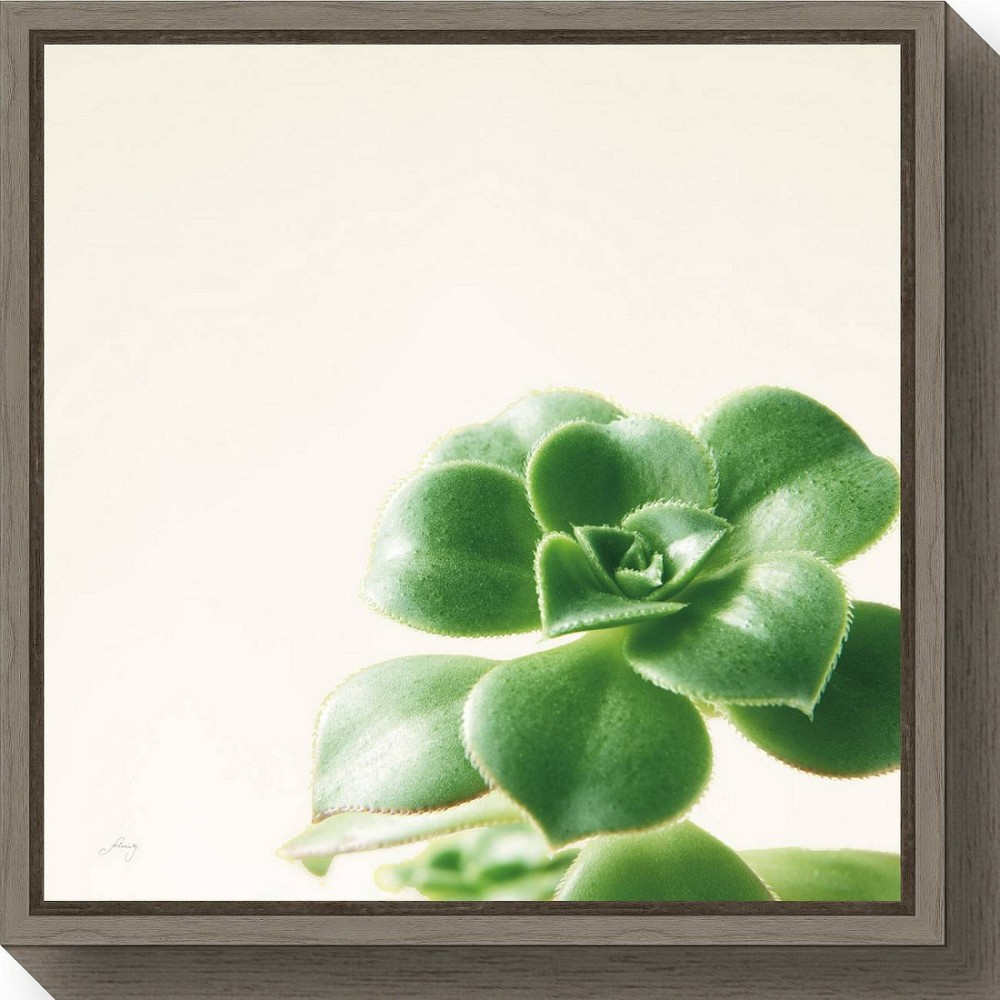 "Image of ""16"""" X 16"""" Succulent Simplicity Viii Neutral By Felicity Bradley Greywash - Amanti Art, White Green"""