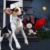 BARK Vampire Bat Dog Toy -  Nocturnal Norm - image 2 of 5