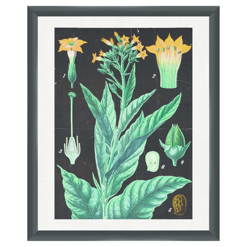 Display your love for greenery with this Traditional Botanicals Wall Art from PTM Images. Showcasing a detailed diagram of a flowering plant in colorful detailing against a solid black backdrop, this colorful botanicals wall art makes for an eye-catching piece of art you\\\'ll love adding to any blank wall. A perfect pick for a nature buff, botanist or scientist, or simply an addition to your nature-themed gallery wall, this botanical artwork captures the beauty of the natural world. Hung on its own or as part of a series on a gallery wall, you\\\'ll love the subtle elegance it adds to your space. Pattern: Shapes.