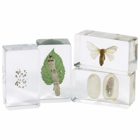 Kaplan Early Learning Life Cycles Moth Specimen Set - Set of 4 - image 1 of 1