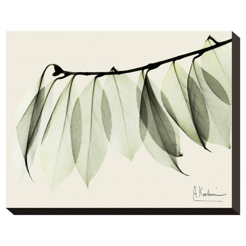 A Camelia Leaf Moment By Albert Koetsier Stretched Wall Canvas Print - Art.com - image 1 of 3