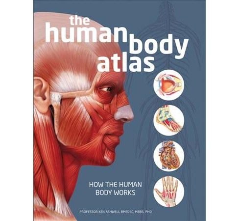 Human Body Atlas : How the Human Body Works (Hardcover) (Ph.d. Ken Ashwell) - image 1 of 1