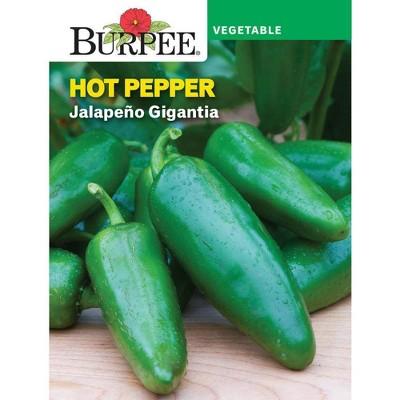 Burpee Pepper Hot Jalapeno Gigantia
