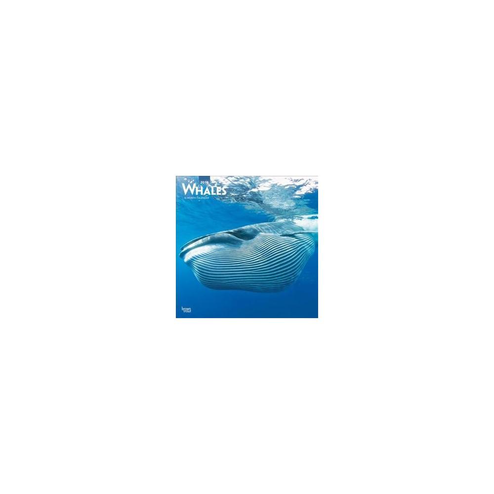 Whales 2019 Calendar - (Paperback)