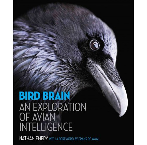 Bird Brain : An Exploration of Avian Intelligence (Hardcover) (Nathan Emery) - image 1 of 1