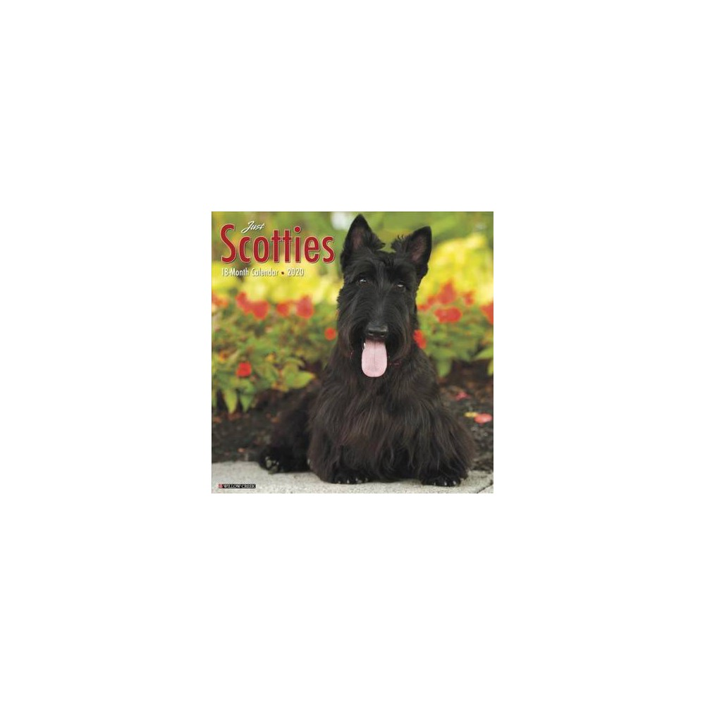 Just Scotties 2020 Calendar - (Paperback)