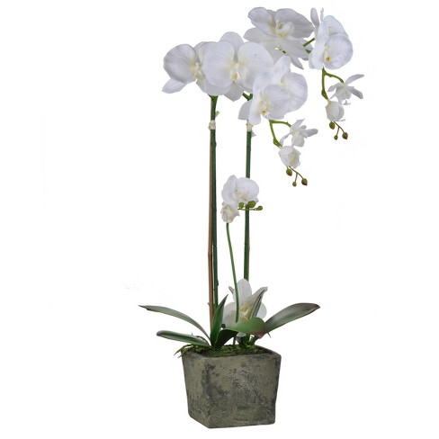 Square Potted Orchid Cream Ab Home Inc Target - Which-artificial-flower-colors-are-good-for-a-home