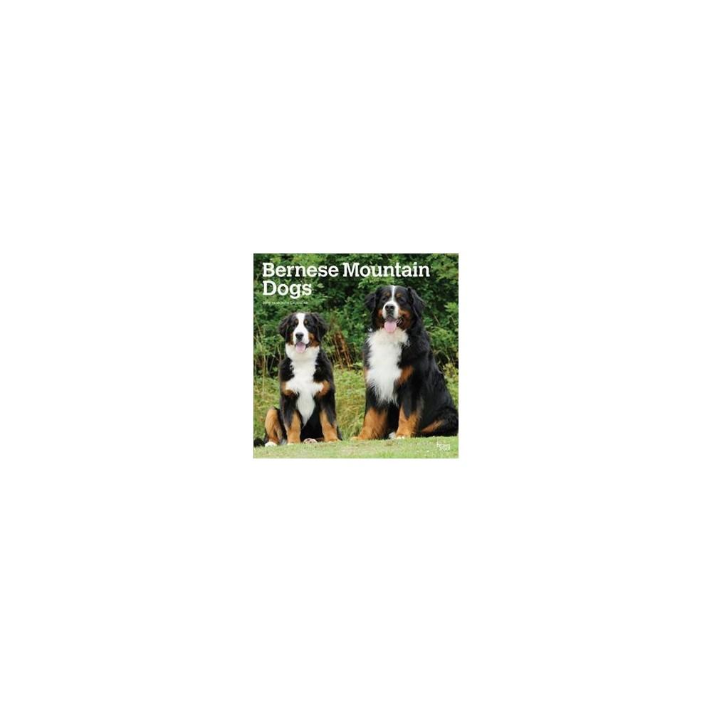 Bernese Mountain Dogs 2019 Calendar - (Paperback)