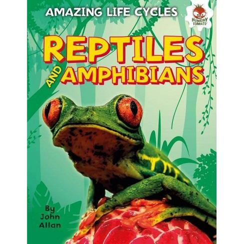 Reptiles and Amphibians - (Amazing Life Cycles) by  John Allan (Hardcover) - image 1 of 1