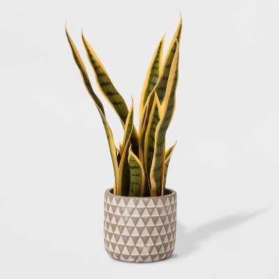 Faux Snake Plant in Geometric Print Cement Pot - Project 62™
