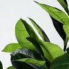 Artificial Rubber Leaf Tree in Pot Green - Threshold™ designed with Studio McGee - image 3 of 4
