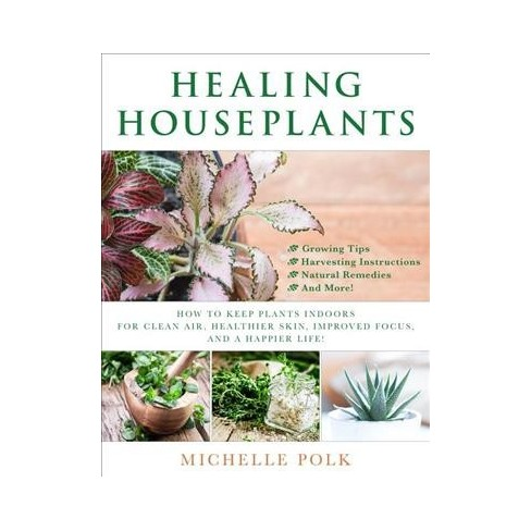 Healing Houseplants How To Keep Plants Indoors For Clean Air Healthier Skin Improved Focus And A Target