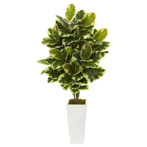 4ft Artificial Variegated Rubber Leaf Plant In White Tower Vase - Nearly Natural - image 1 of 1