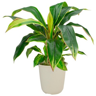 """Northlight 25"""" Dracaena Artificial Potted Plant - Green/White"""
