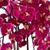 "Dahlia Studios Potted White Ceramic 29"" High Faux Fuchsia Orchid - image 3 of 4"