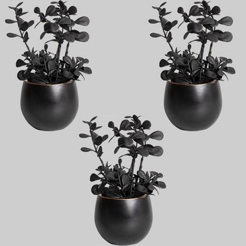 3pk Plants Boxwoods - Bullseye's Playground™ - image 1 of 1