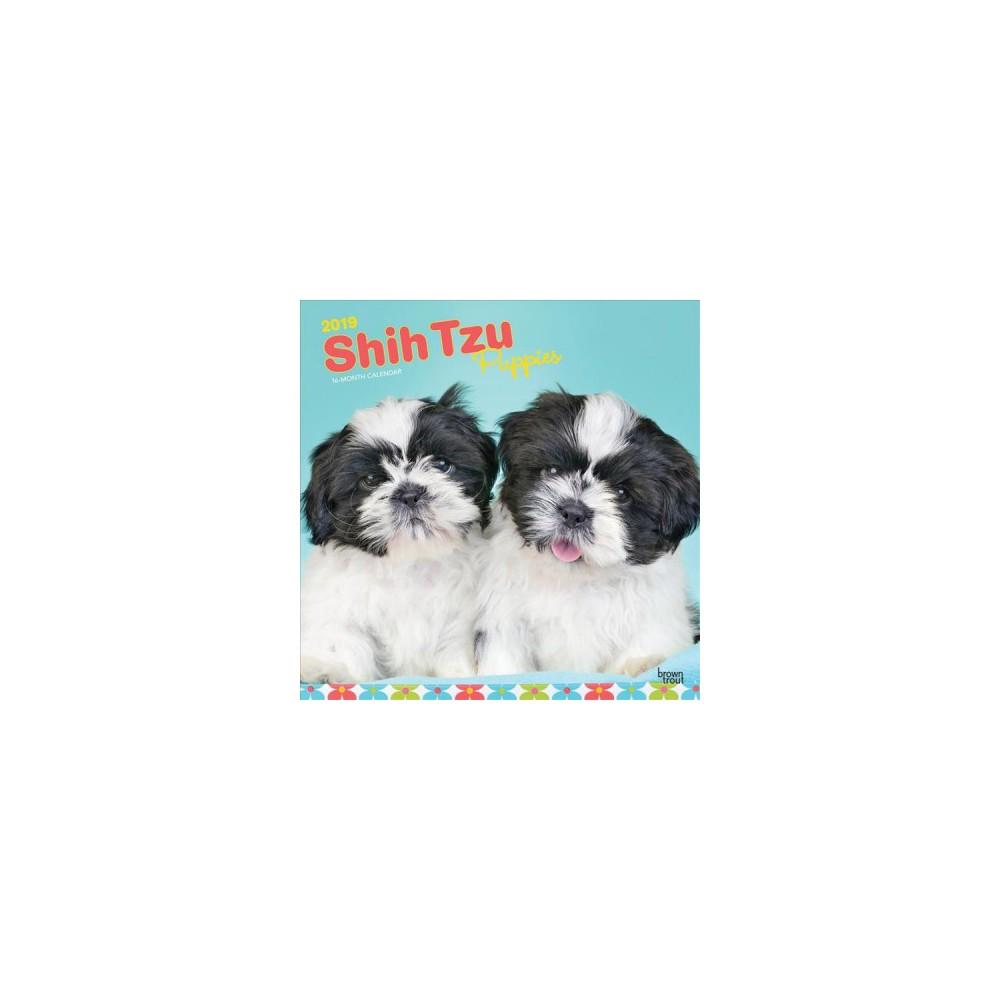 Shih Tzu Puppies 2019 Calendar - (Paperback)