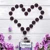Sambucol Immunity Support Gummies - Black Elderberry - 30ct - image 4 of 4