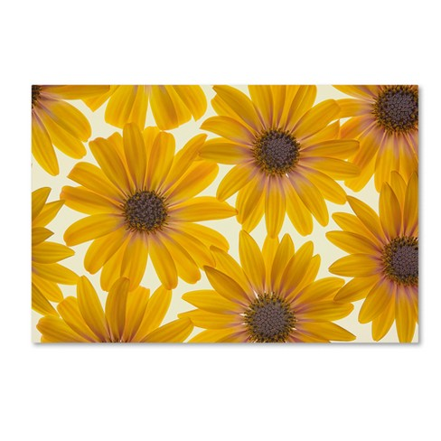 Trademark Global Cora Niele 'Yellow Cape Daisies' Unframed Wall Canvas Art - image 1 of 3