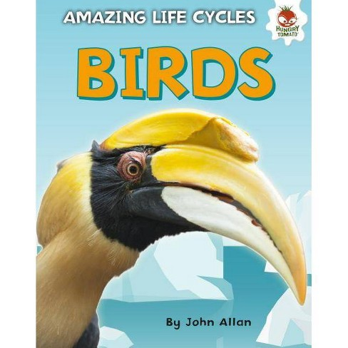 Birds - (Amazing Life Cycles) by  John Allan (Hardcover) - image 1 of 1