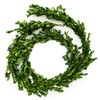 6ft Preserved Boxwood Artificial Garland - sugar paper™ - image 3 of 3